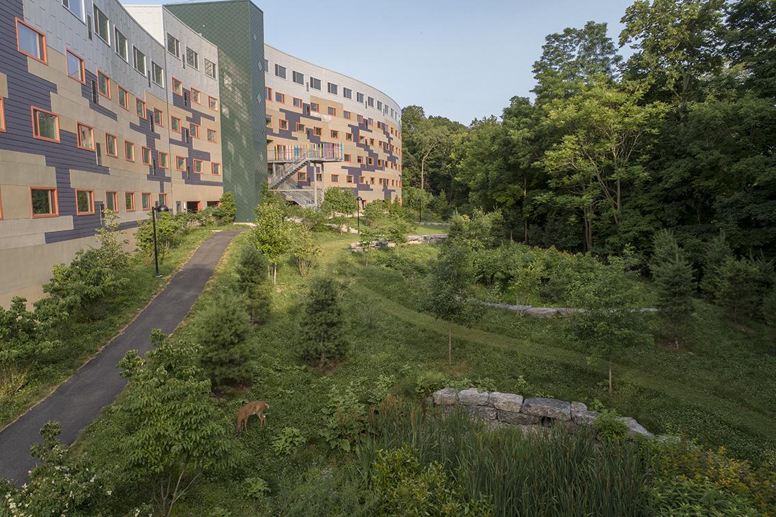 Collegetown Terrace bioretention area