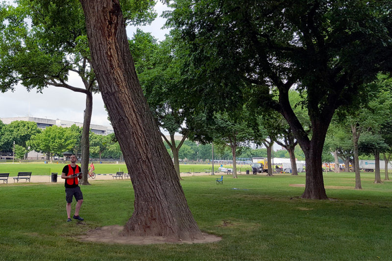 TWMLA Designer Bryan Denig Works to Preserve Elm Trees on the National Mall