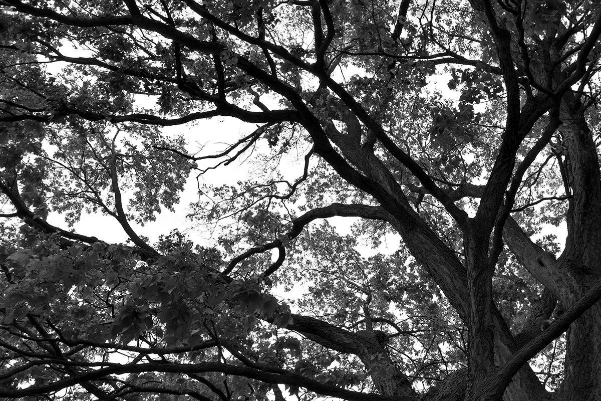 TWMLA Designer Bryan Denig Becomes Certified Arborist